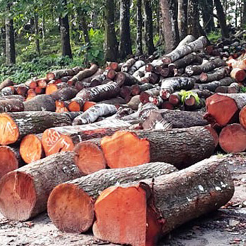 Indonesian mahogany furniture